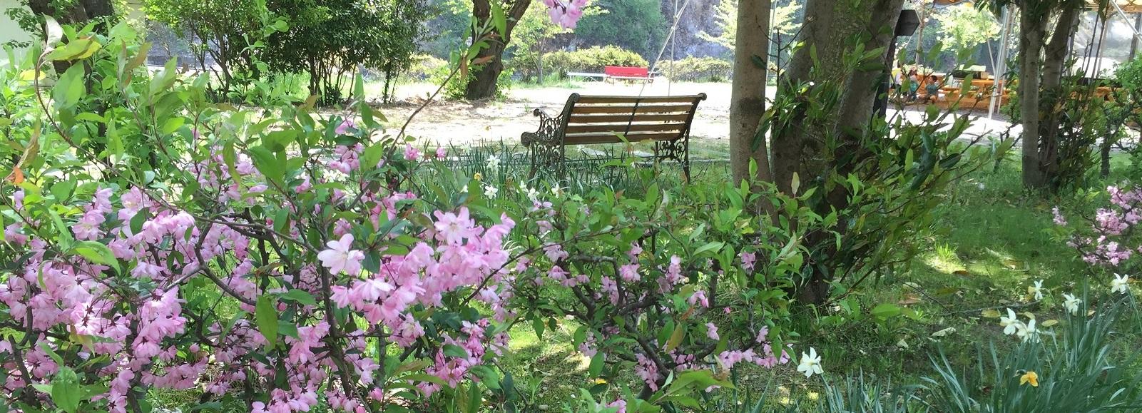 5月 花とベンチ
